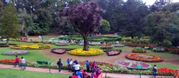 ooty tour and travel